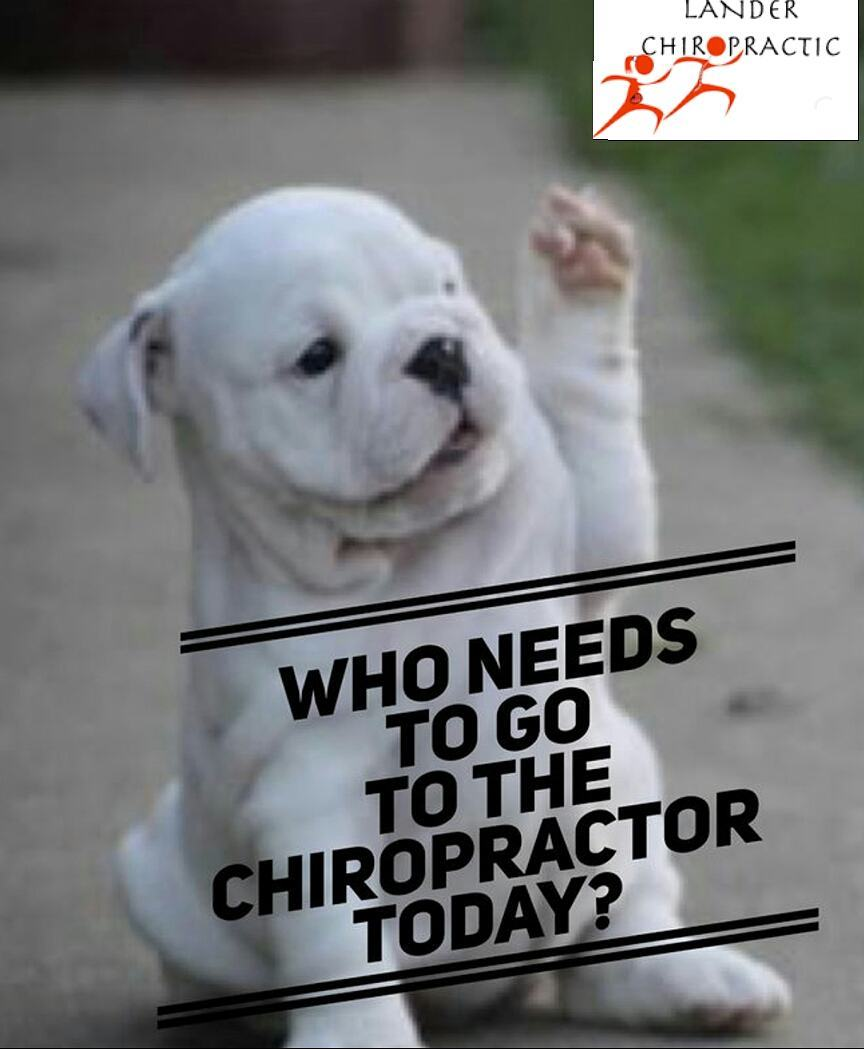 Do you need to see the chiropractor? Dont wait! Appointmentshellip